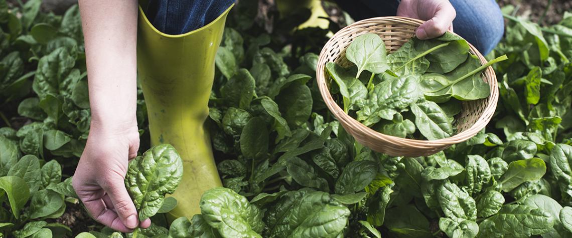 5 cose che dovete assolutamente sapere sugli spinaci freschi